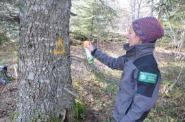 Marquage d'un arbre à biodiversité © TL-RNNCS