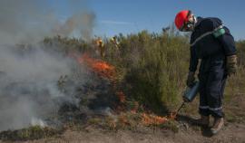 Mise à feu du brûlis 2017 © RNN Pinail - J.Y. Couteau