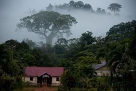 Parc amazonien de Guyane - © O. Jobard / Coeurs de nature / SIPA