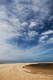 Réserve naturelle du banc d'Arguin - © F. Lepage / Coeurs de nature / SIPA