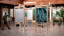 Exposition Forêts naturelles