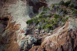 Maquis pionnier - © M. Cristofani / Coeurs de nature / SIPA