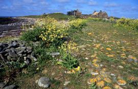 Anciennes fermes sur Trielen - © R.-P. Bolan / Bretagne Vivante