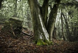 Reflet sur des troncs de hêtres - © L. Wen / Coeurs de nature / SIPA