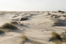 Dunes blanches et oyats sur la Pointe de Saint-Quentin - © L. Alvarez / Coeurs de Nature / SIPA