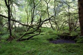 Sous-bois humide - © Y. Despert / RN Frankenthal Missheimle