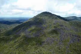 Vue de la réserve - © Dewynter / ONF