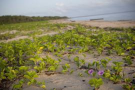 La plage de l'Amana - © O. Jobard / Coeurs de Nature / SIPA