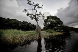 Rives de la rivière Orapu - © M. Cristofani / Coeurs de nature / SIPA