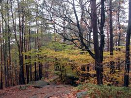 Chemin en automne - © P.-M. Aubertel
