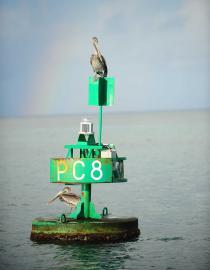 Pélican sur une balise de chenal - © B. Celica / Coeurs de Nature / SIPA