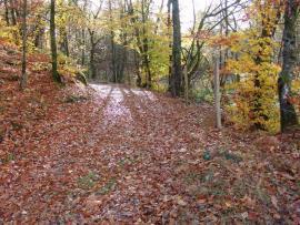 Chemin en automne - © CEN Limousin