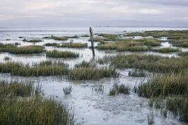 La baie à marée basse - © T. Trossat / Coeurs de Nature / SIPA