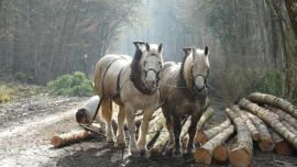 Débardage à cheval - © A. Villaumé