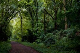 Chemin en sous-bois - © R. Meigneux / Coeurs de nature / SIPA