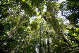 Cime des arbres - © M. Cristofani / Coeurs de nature / SIPA
