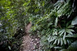 Sentier dans la réserve - © M. Cristofani / Coeurs de nature / SIPA