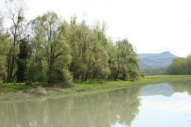 Le Rhône - lône en l'ilon aux Avenières - © R. Quesada