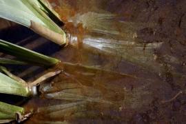 Reflet de marécage - © S. Darblade / C. Ducailar