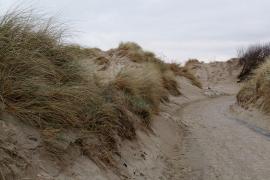 Dunes à Leffrinckoucke - © M.-L. Nguyen / Commons