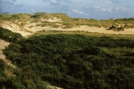 Panne dunaire - © G. Lemoine