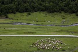 Pâturage ovin - © F. Lepage / Coeurs de nature / SIPA