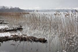Roselières à Doussard - © T. Trossat / Coeurs de Nature / SIPA