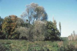 Forêt fraîche sur terrasse limoneuse - © CDPNE