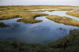 Vue des marais - © F. Lepage / Coeurs de nature / SIPA