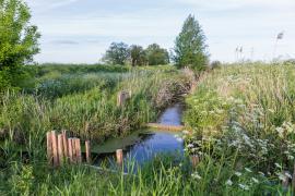 Vue du marais - © RNN Marais de Bruges