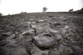 Dalle à ammonites - © M. Cristofani / Coeurs de nature / SIPA