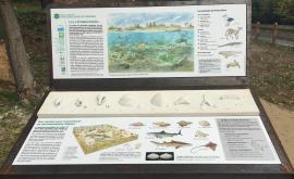 Panneaux et matrice de fossiles – Pierrefitte - © CD91-RNNGE