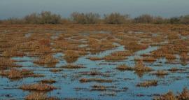 Sansouires inondées - © D. Cohez / TdV