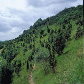 Riez du Mont de Boffles - © CEN NPDC