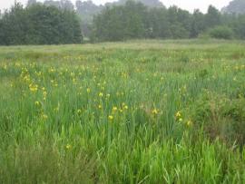 Prairie à iris - © B. Gallet