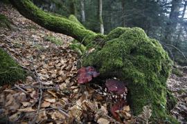 Arbre mort et champignons - © P.-M. Aubertel