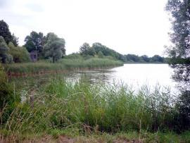 Vue de l'étang - © M. Tollié / CEN Lorraine