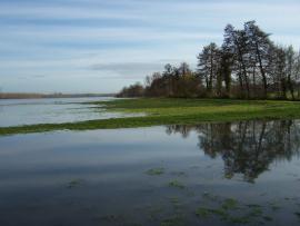Vue du marais - © RNR Marais de Sougeal