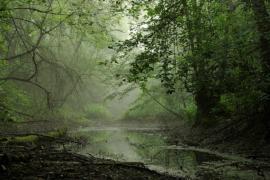 Sur les bords de la Moselle - © RN Moselle sauvage