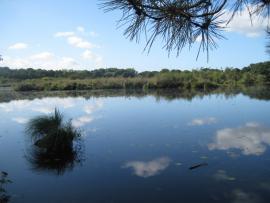 Vue de l'étang du pont de Fer - © G. Gaudichon