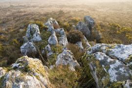 Rockulkull - © E. Holder