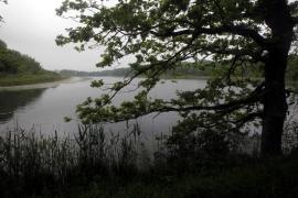 Chêne au bord de l'étang - © P.-M. Aubertel