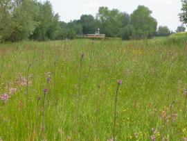 Prairie à cirse des marais - © B. Gallet