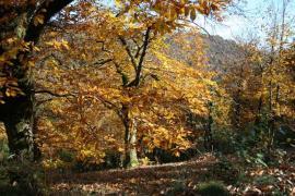 Dans la réserve naturelle - © LPO Aveyron