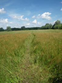 Prairie de fauche - © Delecourt