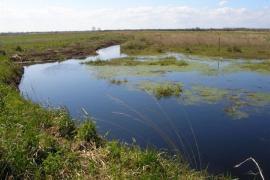 Vue des marais - © RN Marais de la Taute