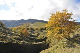 Col de Miqueu - © RNR Massif du Pibeste Aoulhet