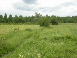 Prairie pâturée en limite de site - © CEN NPDC