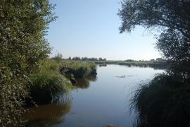 Dans le marais de Brière - © Perky / Wikipedia