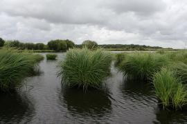 Dans le marais de Brière - © Nono Vlf / Wikipedia